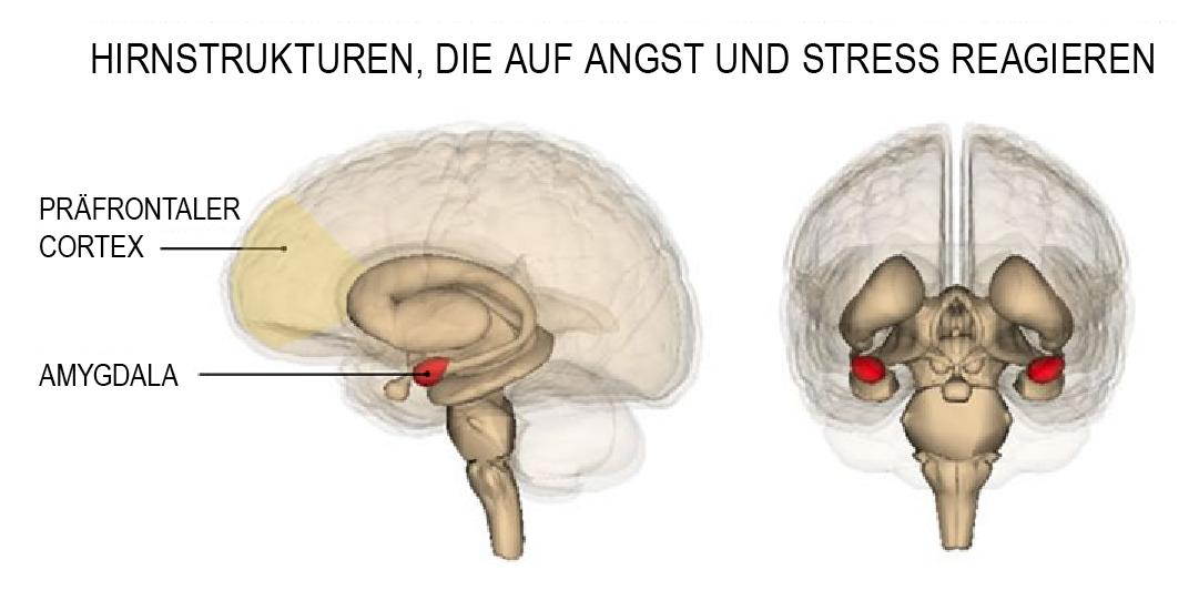 Das Verhalten wird vom Gehirn gesteuert – GUSP